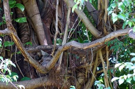 Tree ~ Photography by Rafael Salazar