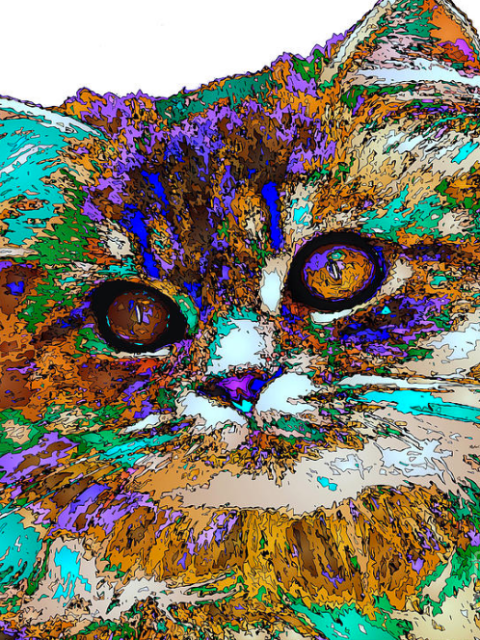 Adele The Cat. Pet Series by Rafael Salazar © 2015